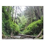 Fern Canyon Redwoods Posters Small Poster