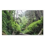 Fern Canyon Redwoods Sticker