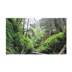 Fern Canyon Redwoods Wall Decal
