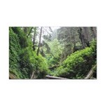Fern Canyon Redwoods Rectangle Car Magnet