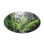 Fern Canyon Redwoods Oval Car Magnet