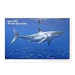 Great White Shark - Postcards (Pkg 8)