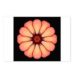 Orange-Red Zinnia I Postcards (Package of 8)