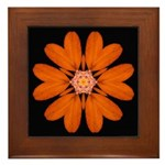 Orange Zinnia I Framed Tile