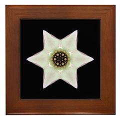 Dogwood Blossom I Framed Tile