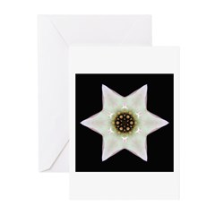 Dogwood Blossom I Greeting Cards (Pk of 10)