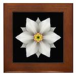 Daffodil II Framed Tile