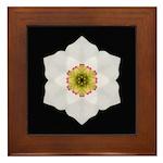 Daffodil I Framed Tile