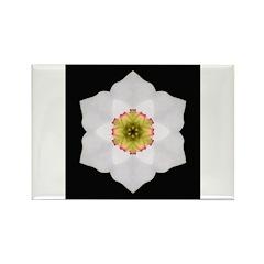 Daffodil I Rectangle Magnet