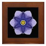 Blue Pansy I Framed Tile