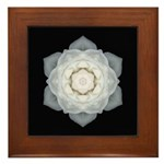 White Rose I Framed Tile