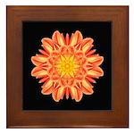 Orange Dahlia I Framed Tile