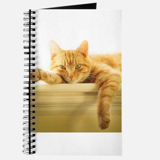 Cute Orange tabby persian cat Journal