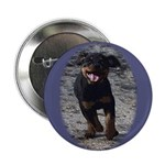 Romping Rottweiler Puppy 2.25