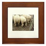 SHEEP LOVERS Framed Tile