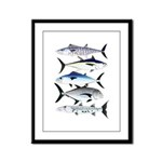 South Pacific Speedy Fishes Framed Panel Print