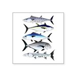South Pacific Speedy Fishes Sticker