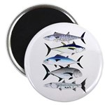 South Pacific Speedy Fishes Magnets