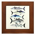 South Pacific Speedy Fishes Framed Tile