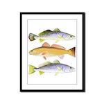 3 West Atlantic Ocean Drum Fishes Framed Panel Pri