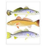 3 West Atlantic Ocean Drum Fishes Posters