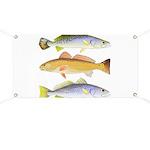 3 West Atlantic Ocean Drum Fishes Banner