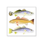 3 West Atlantic Ocean Drum Fishes Sticker