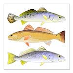 3 West Atlantic Ocean Drum Fishes Square Car Magne