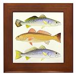 3 West Atlantic Ocean Drum Fishes Framed Tile
