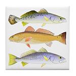 3 West Atlantic Ocean Drum Fishes Tile Coaster