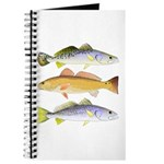 3 West Atlantic Ocean Drum Fishes Journal
