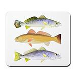 3 West Atlantic Ocean Drum Fishes Mousepad