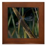 Black Dragonfly Framed Tile