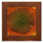 Sunflower with Bee Framed Tile