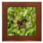 Red Dragonfly Framed Tile