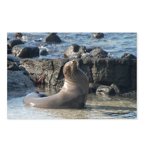 Sea Lion 1 Postcards (Package of 8)