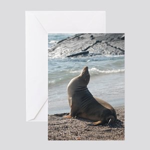 Sea Lion 2 Greeting Card