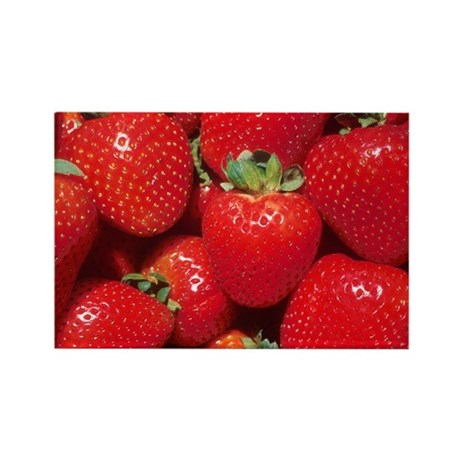 Strawberries Rectangle Magnet (10 pack)