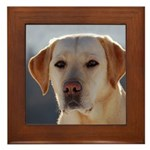 Labrador Retriever Framed Tile