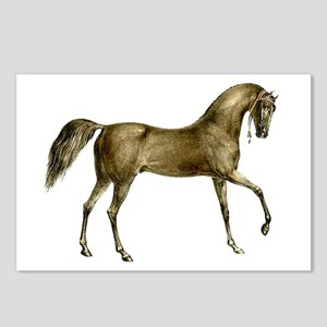 Vintage Horse Postcards (Package of 8)