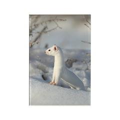 Winters Coat Rectangle Magnet