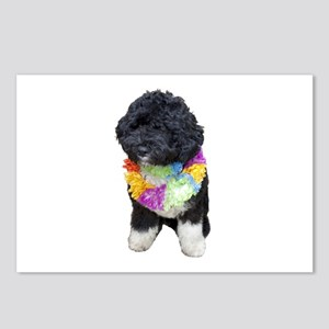 First Dog Bo Postcards (Package of 8)