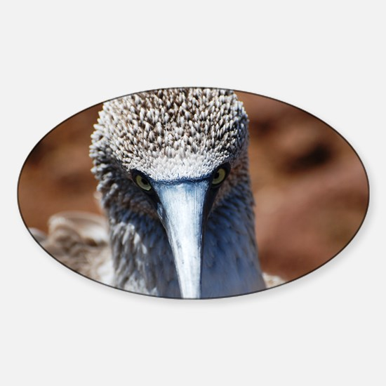 Blue Footed Boobie Close-Up Oval Decal