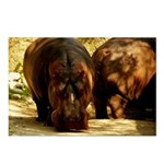 Heads or Tails Postcards (Package of 8)