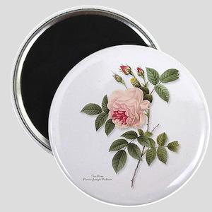 Tea Rose Magnet