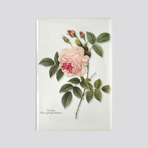 Tea Rose Rectangle Magnet