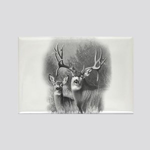 Mule Deer Rectangle Magnet
