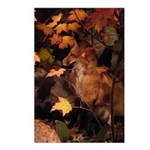 Red Fox In Fall Postcards (package Of 8)