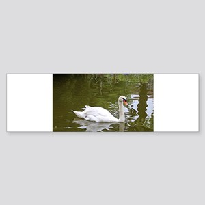 Swan, Santiago, El Camino, Spain Bumper Sticker