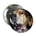 Crazy beagle Button